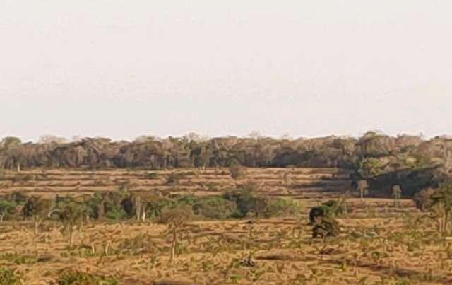 PMA autua infrator em quase meio milhão por desmatamento em vegetação protegida