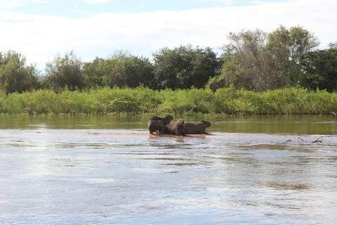Interação entre fauna e flora é vital para recuperar Pantanal