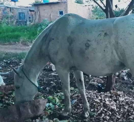 """Égua desaparece com """"árvore e tudo"""" na Nova Campo Grande"""