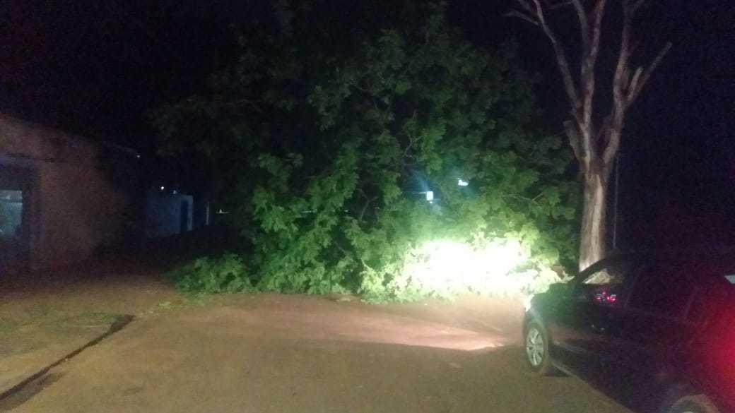 Árvore interditou completamente a passagem de veículos pela rua. (Foto: Direto das Ruas)