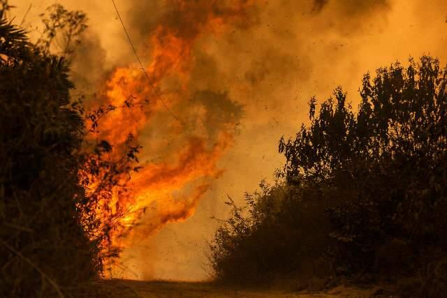 Barulho das chamas parecia tempestade, diz fotógrafo sobre cobertura no Pantanal