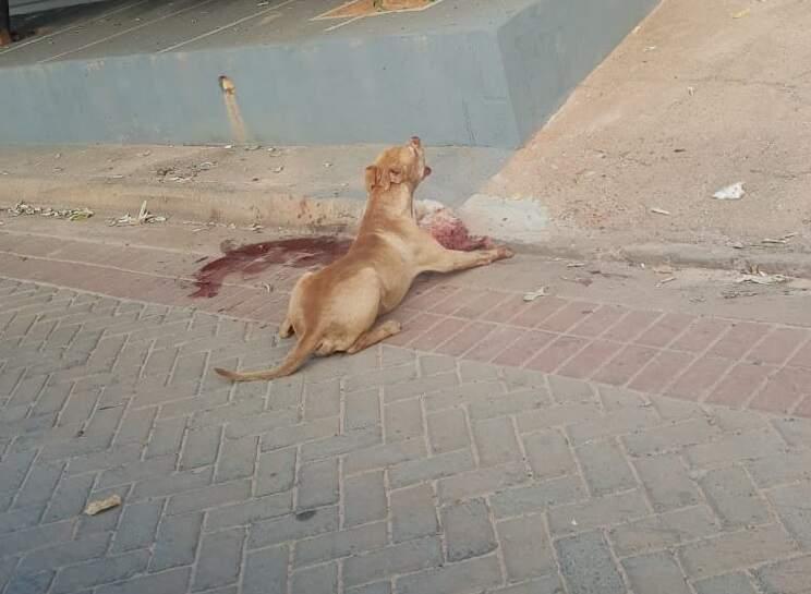 Cachorro foi fotografado após capturar a matar cão de pequeno porte (Foto: Perfil News)