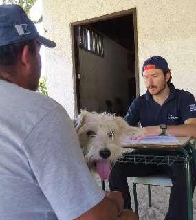 Pesquisa em MS irá coletar amostras de 100 cães e gatos para rastrear a covid-19
