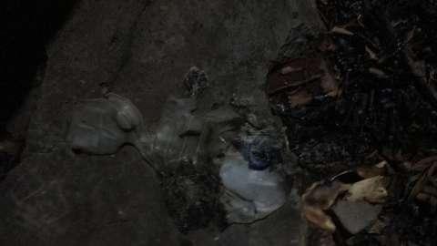 Bomba caseira é deixada em frente à casa, explode e fere pitbull
