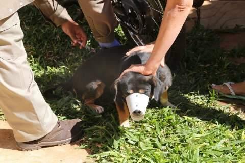 Mutirão irá vacinar cães e gatos contra raiva em pet shop no sábado