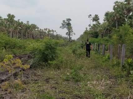 Desmatamento investigado pela PF serve para pecuária e extração de madeira em MS
