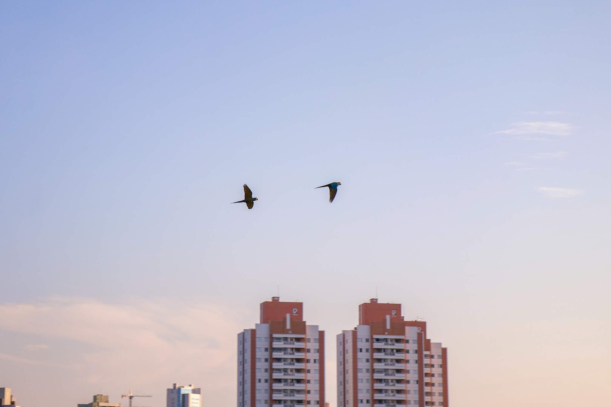 Amanhecer visto com céu aberto da região do Bairro Itanhangá Park (Foto: Henrique kawaminami)