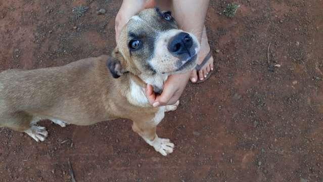 Homem flagrado ao agredir e atirar em cachorro é multado em R$ 2 mil pela PMA
