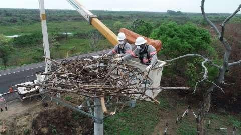 Ninho é construído para acolher tuiuiús em ponto devastado pelo fogo