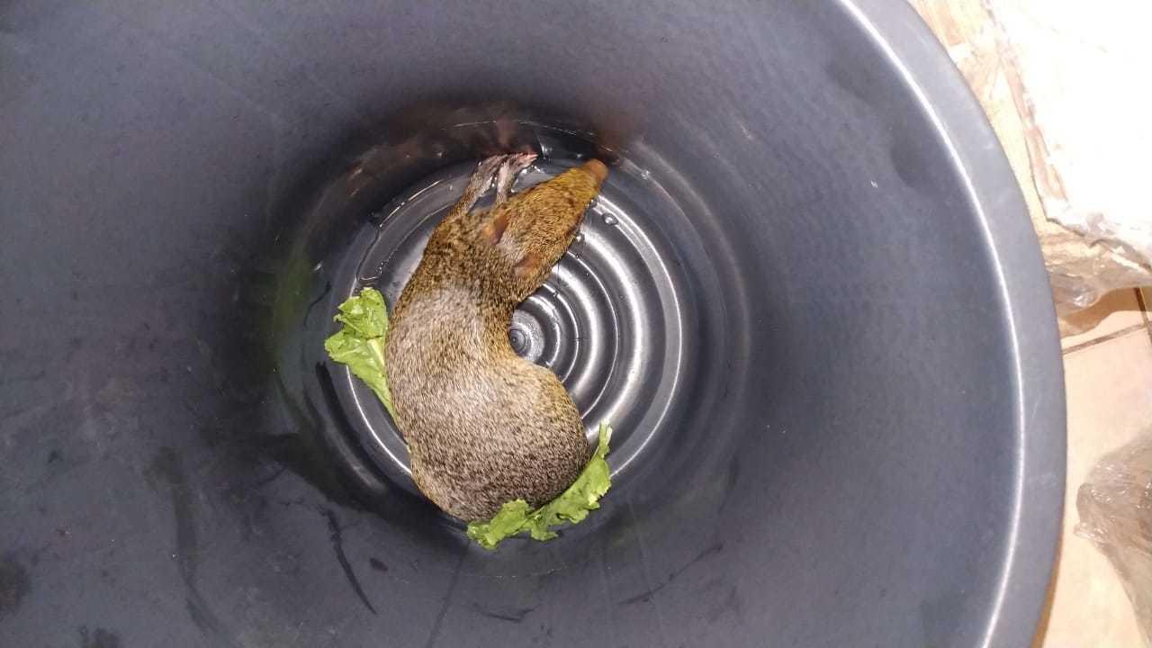 Animal foi recolhido em balde até que fosse devolvido à natureza (Foto: Direto das Ruas)