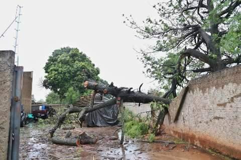 Árvore cai sobre muro de posto de combustíveis e causa estragos