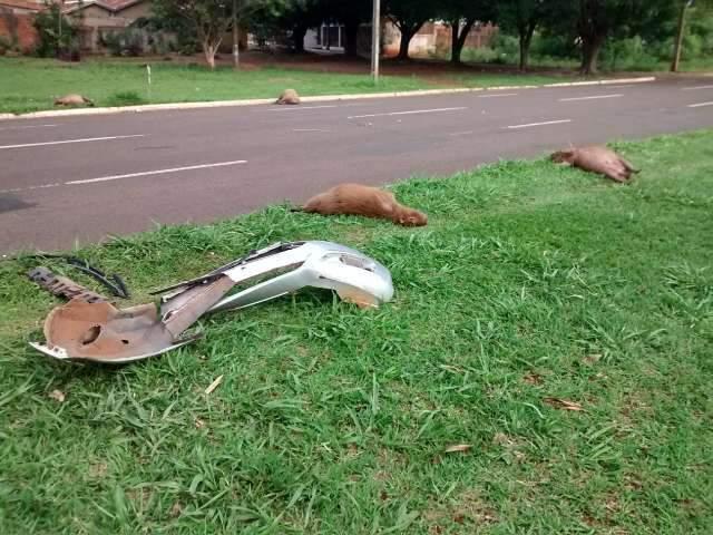 Motorista mata 4 capivaras e deixa para-choque em avenida do Aero Rancho