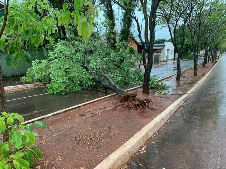 Árvore caida na avenida de Nioque. (Foto:Direto das Ruas)
