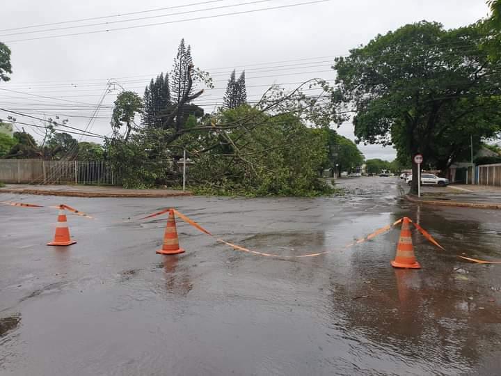 Árvore arrebentou fios e deixou centro de Ponta Porã sem energia elétrica (Foto: Porã News)