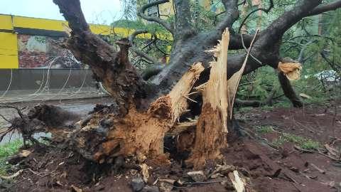Pronto, plano de arborização fica para próximo prefeito, diz secretário