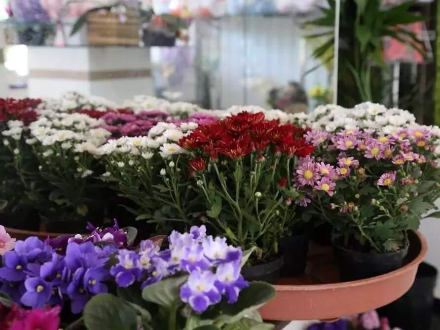 Os duradouros crisântemos expostos em floricultura de Campo Grande são as flores mais procuradas neste Dia de Finados. (Foto: Campo Grande News/Arquivo)