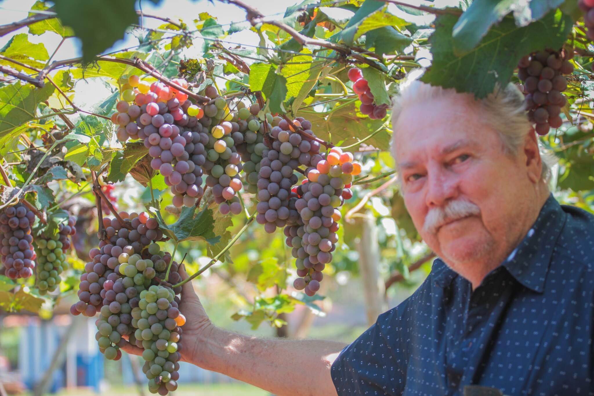 Celso, o dono, diz que as uvas costumam acabar em semanas (Foto: Marcos Maluf)