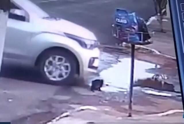 Vídeo mostra carro passando bem devagar em cima de gato (Foto: Reprodução)