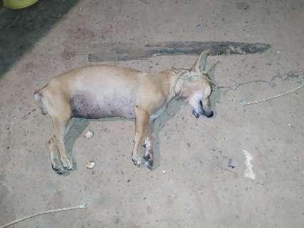 Homem é preso e multado em R$ 3 mil por matar cachorro a pauladas