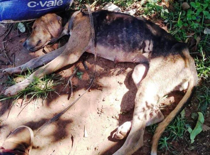 Animal foi resgatado por uma ONG local. (Foto: Gazeta News)