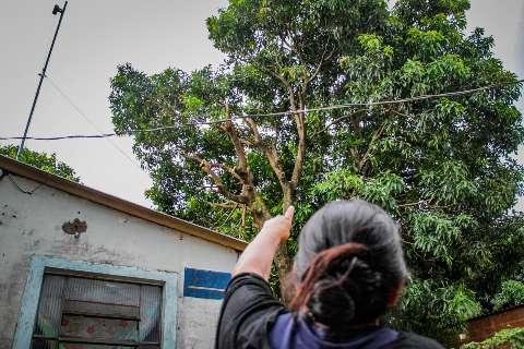 Nada inofensiva, poda de árvore causou morte e acabou com planos de casamento