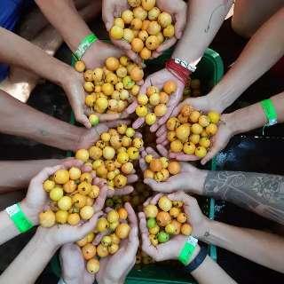 Cata Guavira traz agrofloresta e comida vegana como soluções