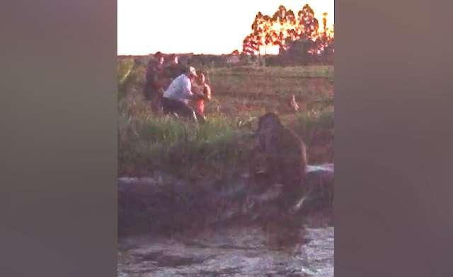 Policiais e moradores resgatam anta com mais de 200 kg de tanque de irrigação