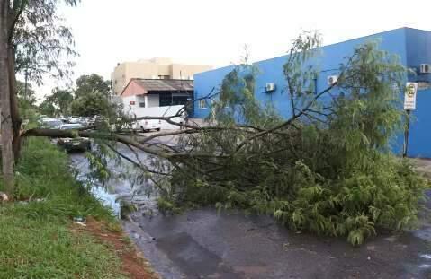 Após chuva forte, árvore caída dificulta entrada de ambulâncias em UPA