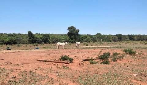 Em denúncia de maus tratos, PM encontra 4 carcaças e 20 vacas magras em fazenda