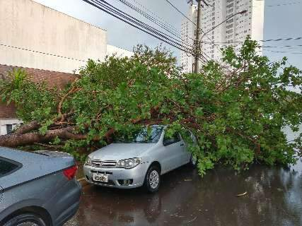 Árvore cai sobre carro no Carandá Bosque e vento derruba semáforo