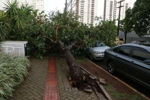Temporal causou 43 quedas de árvores e Inmet reforça alerta de tempestade