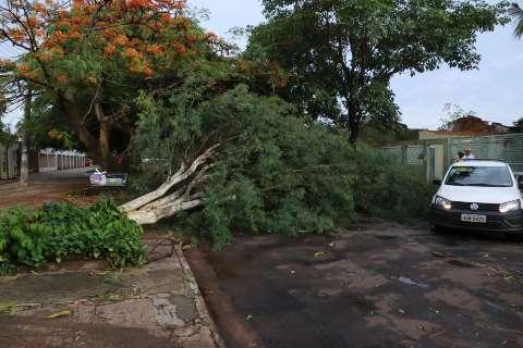 Temporal de quinta-feira deixou moradores de 24 bairros sem energia elétrica