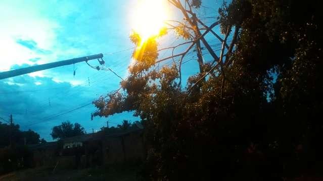 Segundo dia de chuva derruba padrão de energia e árvore fica sobre fiação