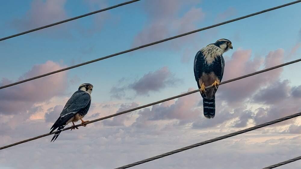 Fotos de pássaros na janela de Bolivar (Foto: Bolivar Porto)