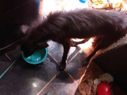 Doente e no meio do lixo, cão é resgatado e estudante multada