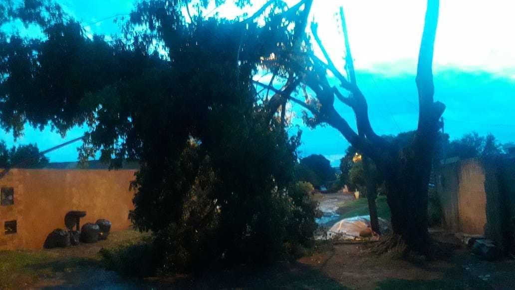 Árvore que caiu no Bairro Santa Mônica durante o temporal de ontem. (Foto: Direto das Ruas)