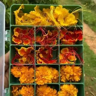 Louco por flores, Bruno vende espécies comestíveis na caixa