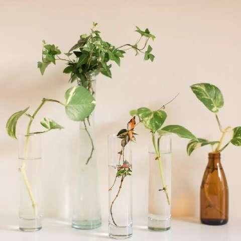 Planta aquática é dica para começar o ano com vida dentro de casa