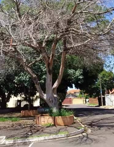 Moradores pedem remoção de árvore seca prestes a cair em fiação