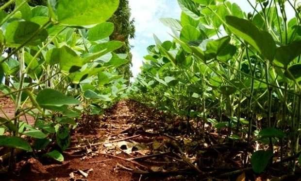 Produtor tem até hoje para registrar área plantada de soja em MS