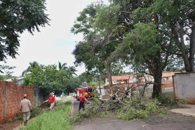 Galho de árvore cai e obstrui rua no Vivendas do Bosque
