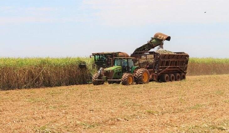 Máquina faz colheita de cana-de-açúcar em plantação de Mato Grosso do Sul. (Foto: Divulgação)