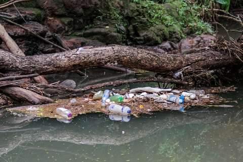 Natureza divide espaço com lixo às margens de córrego na Nelly Martins