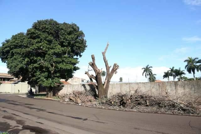 """Restos de árvores derrubadas pela chuva """"viram"""" montes de lixo em bairro"""