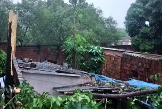 Temporal derruba árvores e alaga 40 casas em Corumbá e Ladário