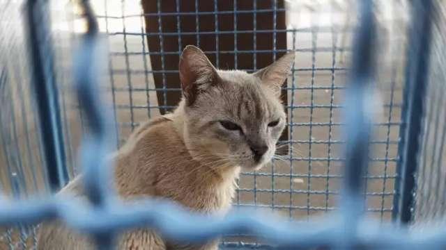 Vagas para castrar gatos acabam em minutos e rapidez gera protestos