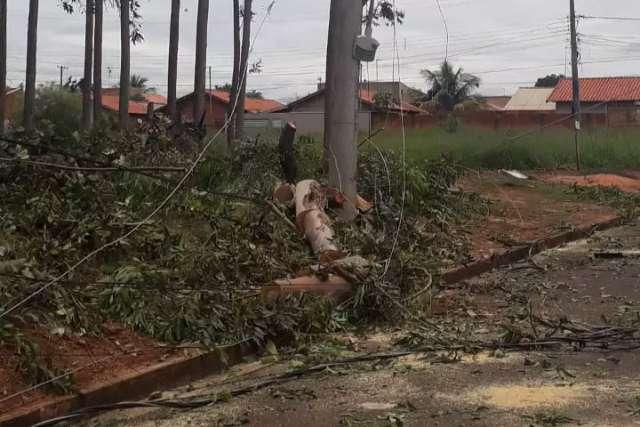 Poda errada faz eucaliptos cairem sobre rede elétrica de aldeia urbana
