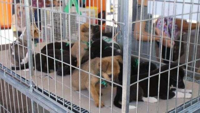 CCZ tem 35 cães e gatos em feira de adoção neste sábado