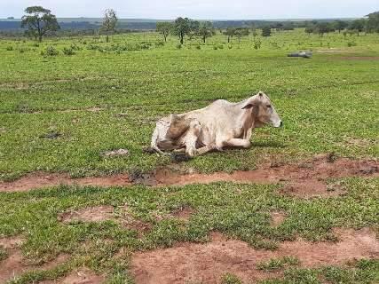 Fazendeiro é multado em R$ 8 mil por deixar 14 bovinos morrerem