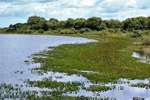 Pantanal: um ecossistema à margem da lei